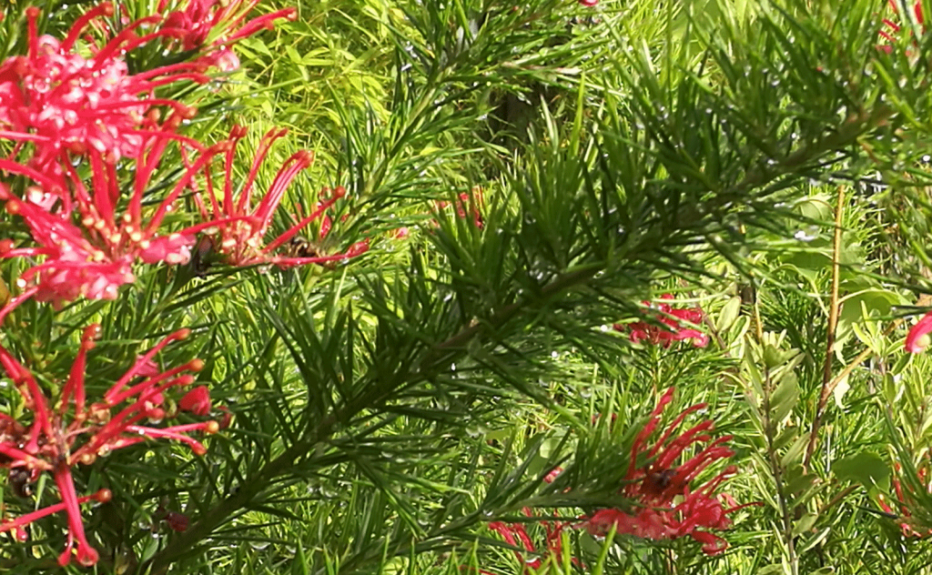 Random red and green leaves