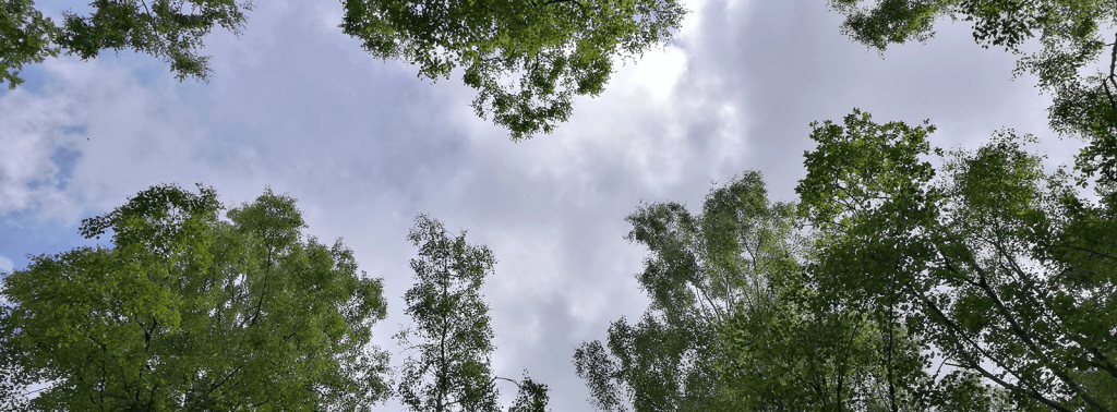 sky and clouds through tops of trees