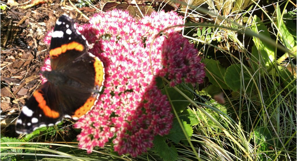 orange and black butterfly on pink flowers