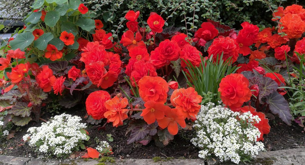 red and white flowers on a kerbedge