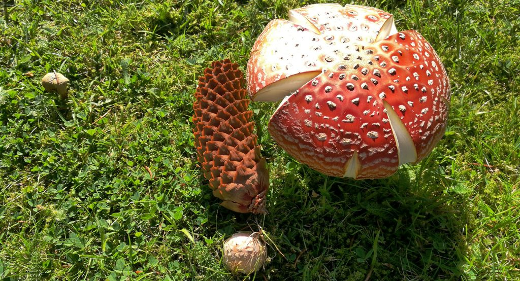 red mushroom and cone on grass