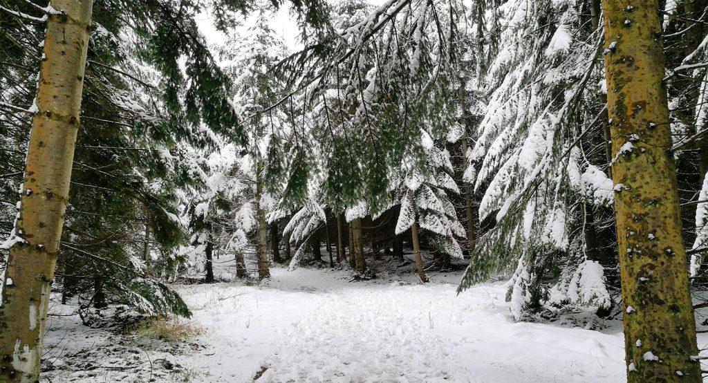 pathway through snowy wood