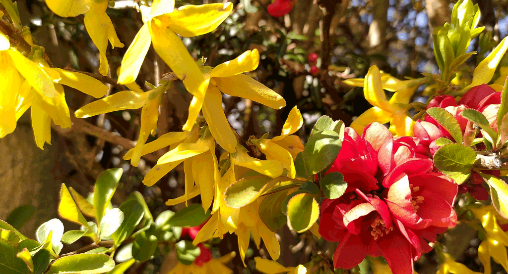 red and yellow flowers with green leaves