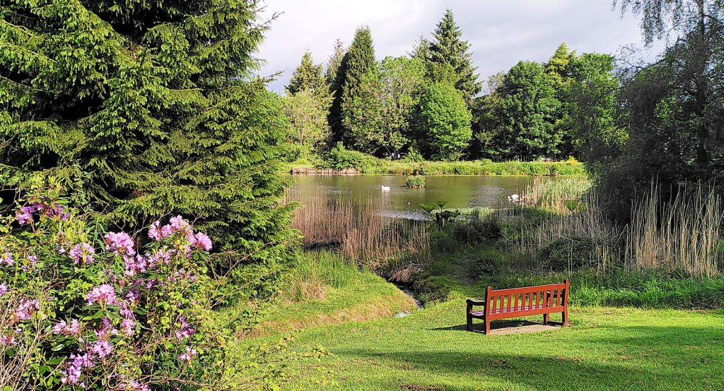 bench facing loch between two trees with pink flowers